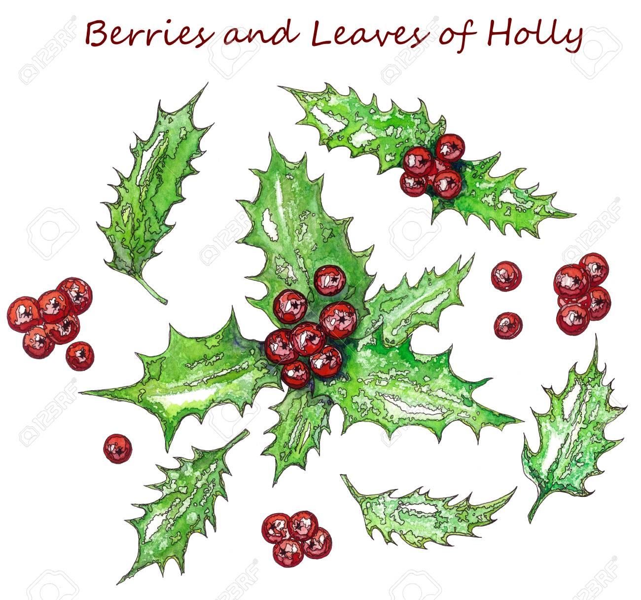 Christmas Leaves.Stock Illustration
