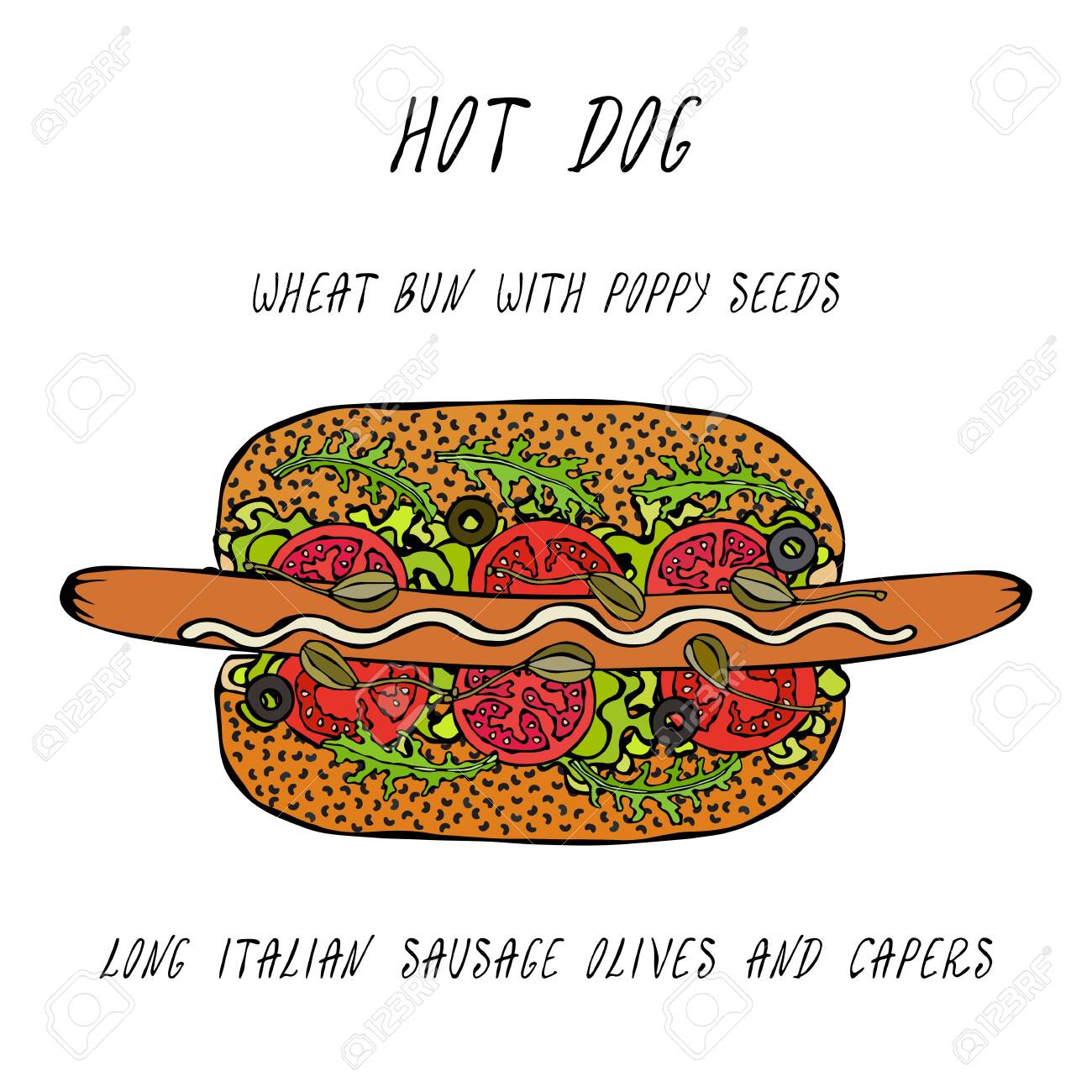 Hot Dog on a Bun with Poppy Seeds. Long Italian Sausage, Olives, Capers, Rocket, Lettuce Salad. Fast Food Collection. Realistic Hand Drawn High Quality Vector Illustration. Doodle Style - 115007716