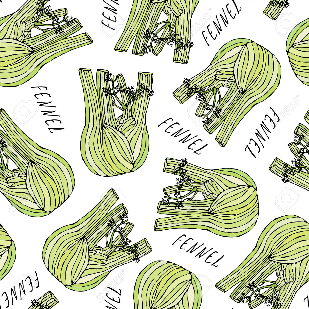 Seamless Endless Pattern of Green Fennel Balb. Vegetable Collection. EPS10 Vector. Hand Drawn Doodle Style Realistic Illustration - 127696327