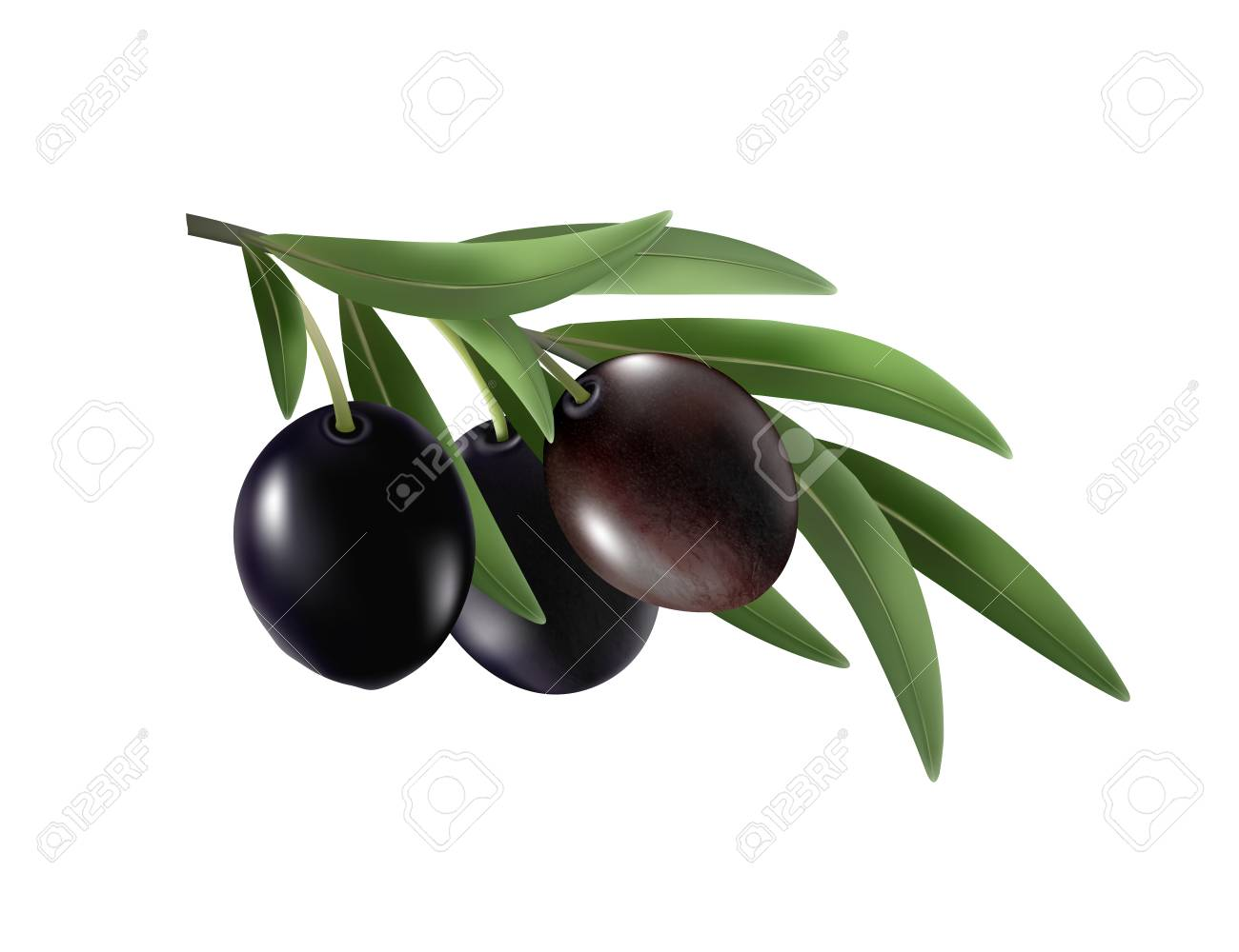 Isolated olives. Three black olive fruits on a branch with leaves isolated on transparent background. realistic vector, 3d - 125657740