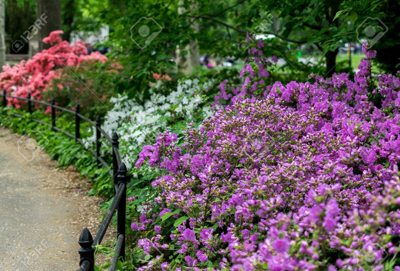 New York City Central Park Spring Flowers Stock Photo Picture And