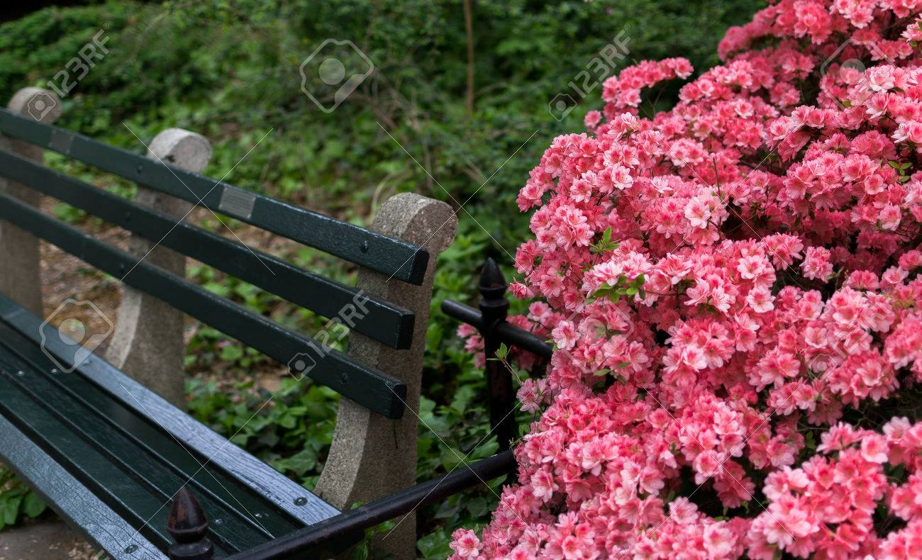New York City Central Park Bench And Flowers Stock Photo Picture