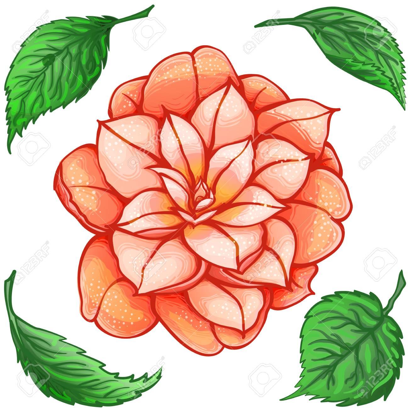 Fleur Exotique Camelia Avec Des Feuilles Vertes Fleur Orange De