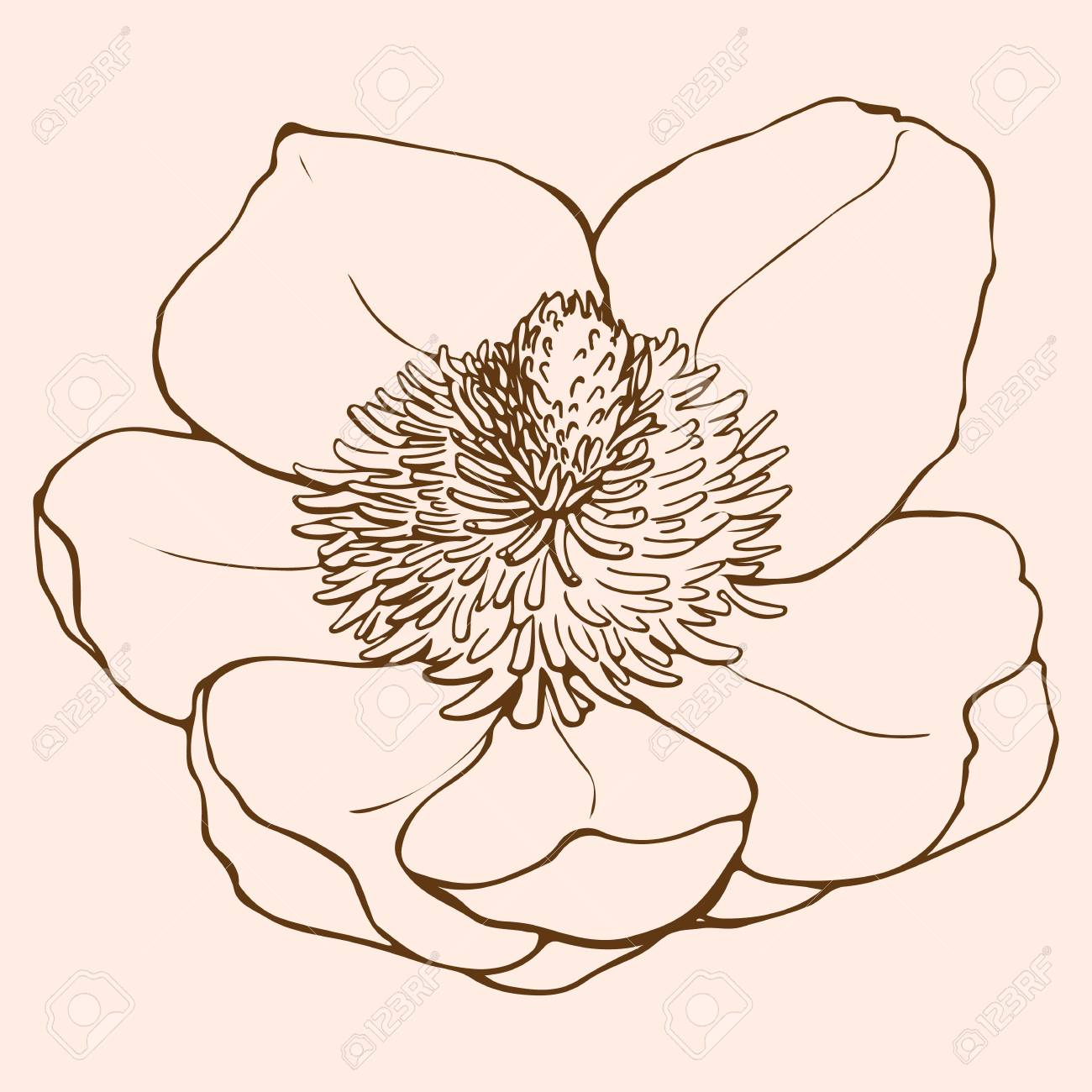 Magnolia Flower Drawing Drawn In Line Art Style Tropical Exotic