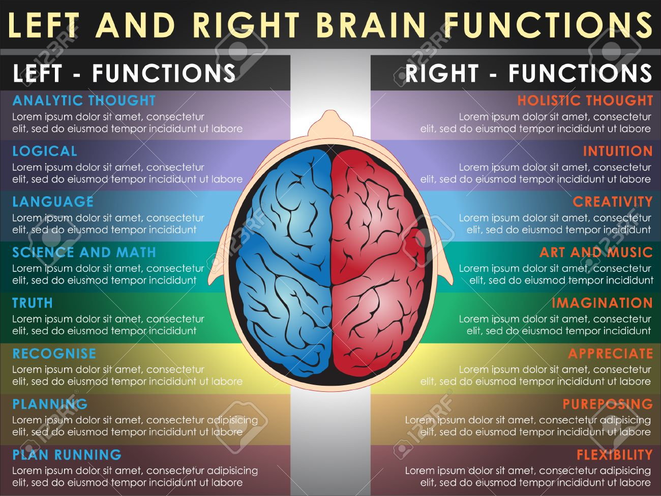 Left And Right Brain Functions, Cerebral Function. Vector And ...