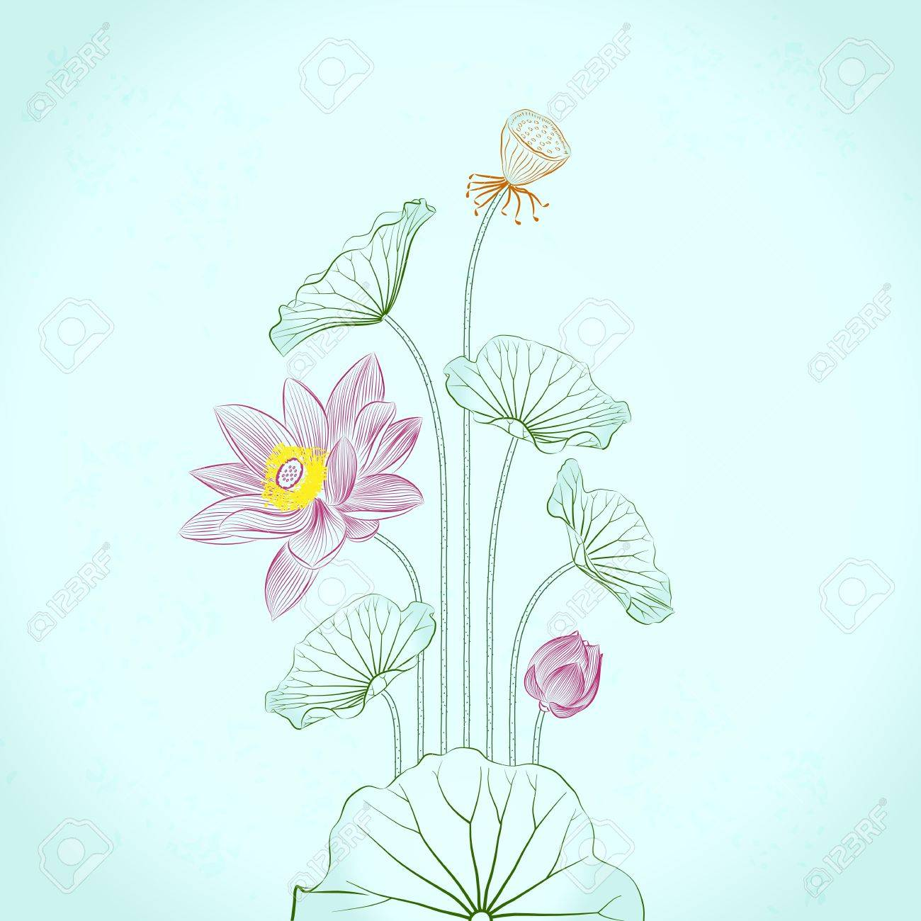 Lotus Painting, line drawing in traditional ink and brush style Stock Vector - 15232887