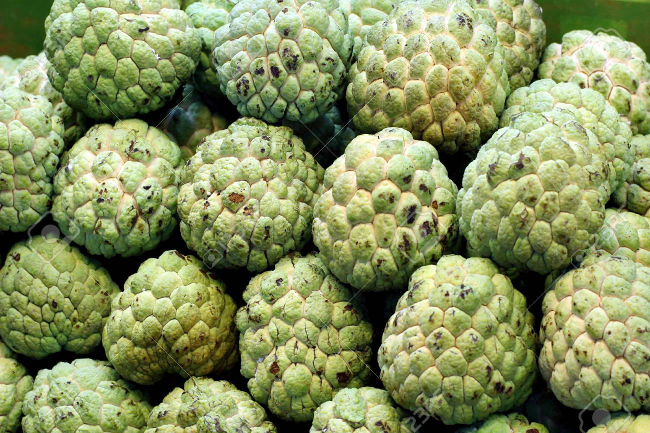 many sugar apples at fruit market stock photo, picture and royalty