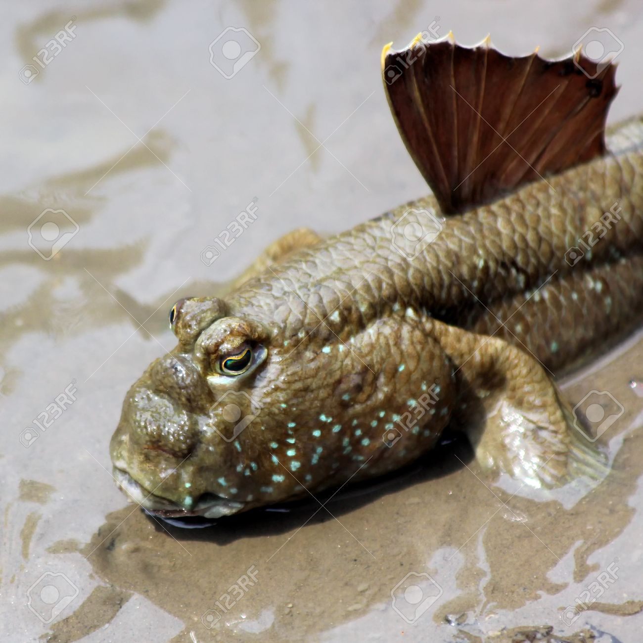Starting a Brackish Aquarium, what you need and what you can keep.