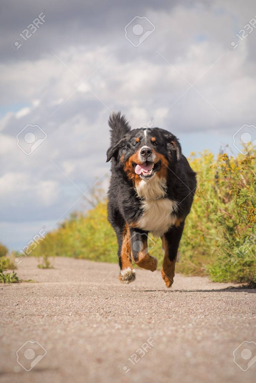 Happy Dog Jumping Stock Photo Happy Dog