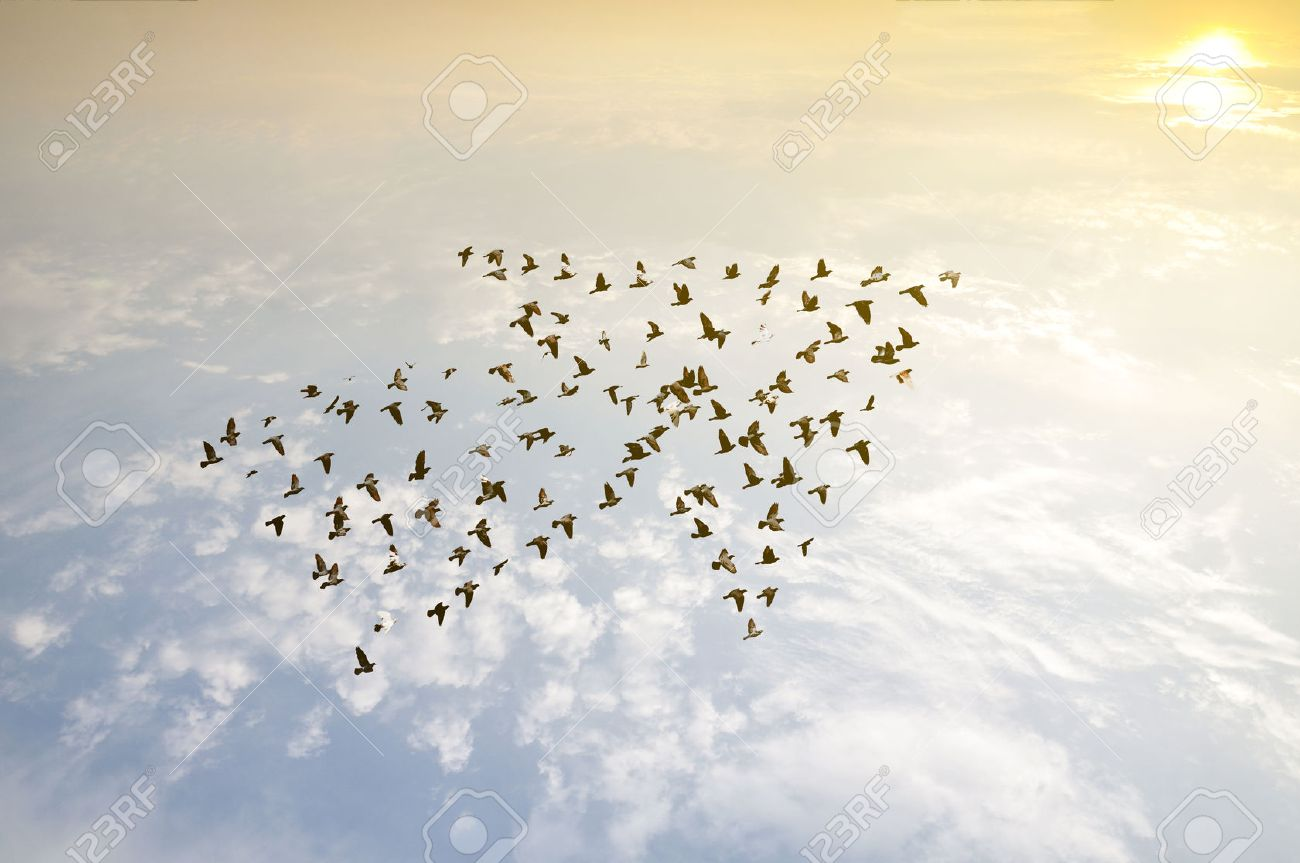 Birds on sky , growth development concept - 50212803