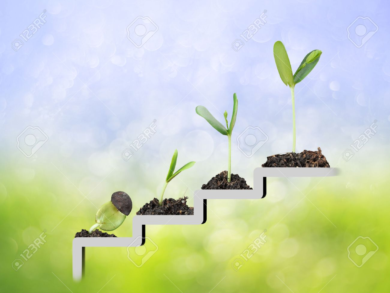 Plant on staircase , growth , development concept - 50212892