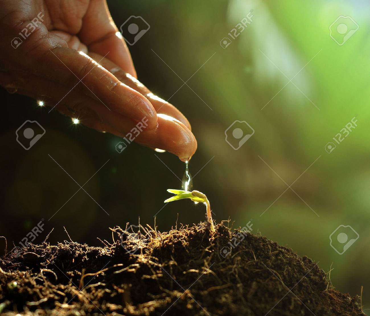 Hand watering to small plant in the morning - 50212898