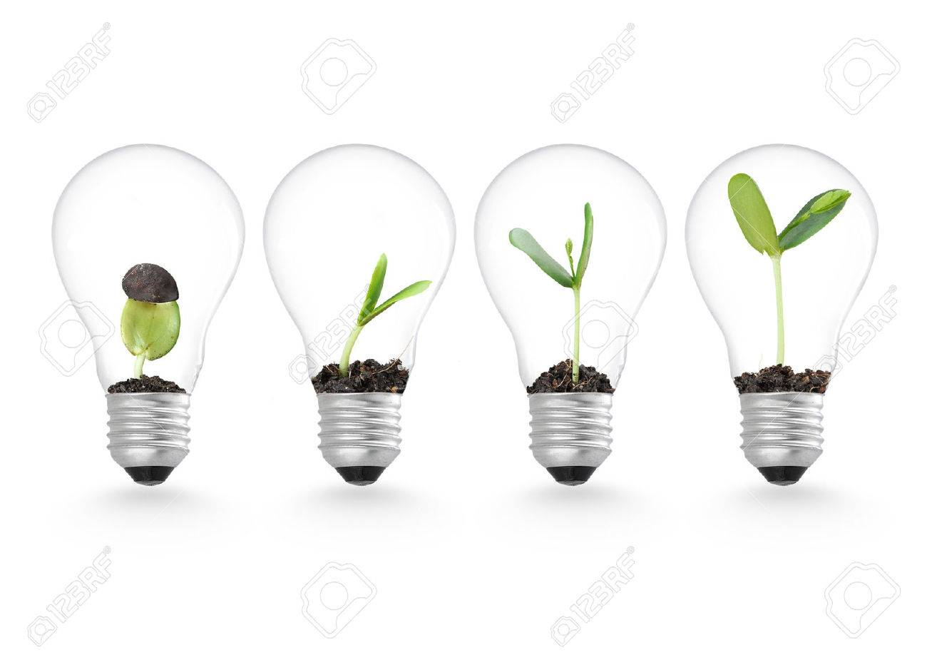 Plant growing in lightbulb , ecology ideas growth concept - 50213182