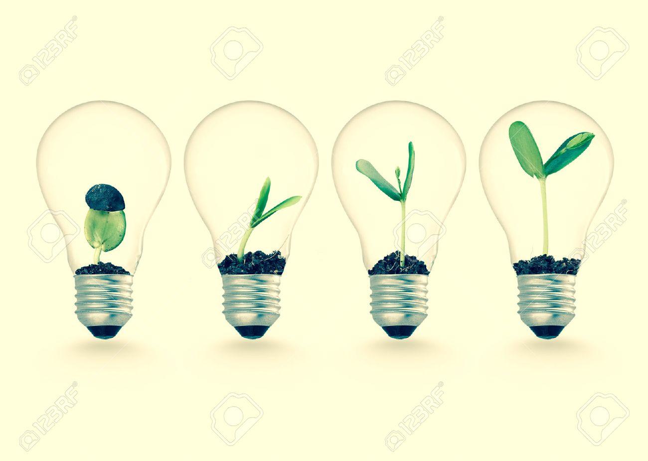 Fabulous Plante Qui Pousse Dans Ampoule, Les Idées De L'écologie Concept De  PQ63