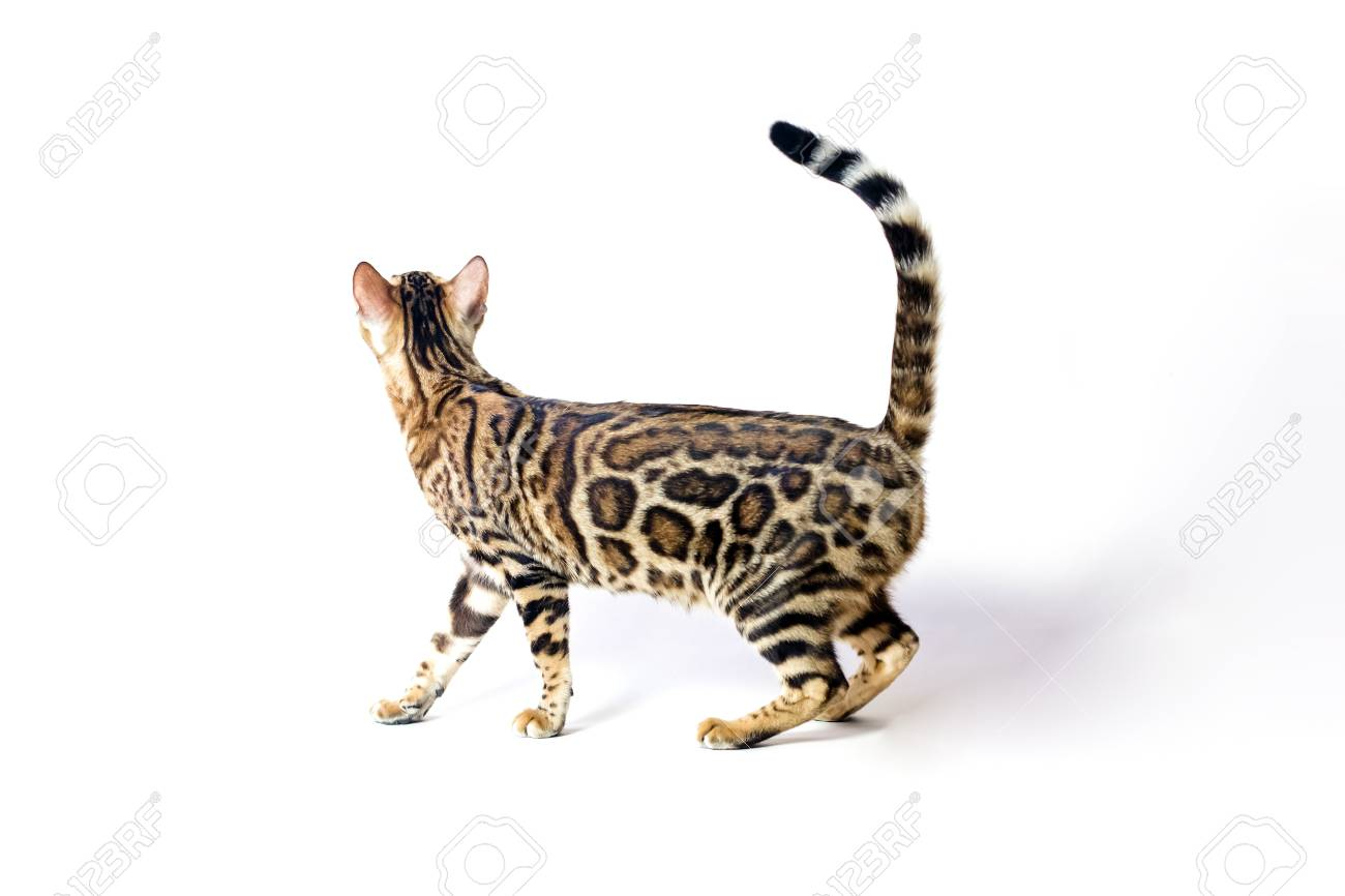 Hermosa Hola Gatito Gato Para Colorear Foto - Dibujos Para Colorear ...