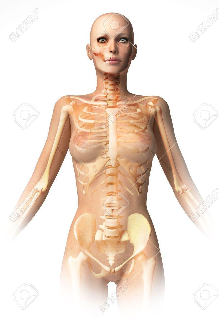 Woman Body With Bone Skeleton Superimposed Anatomy Image Stock