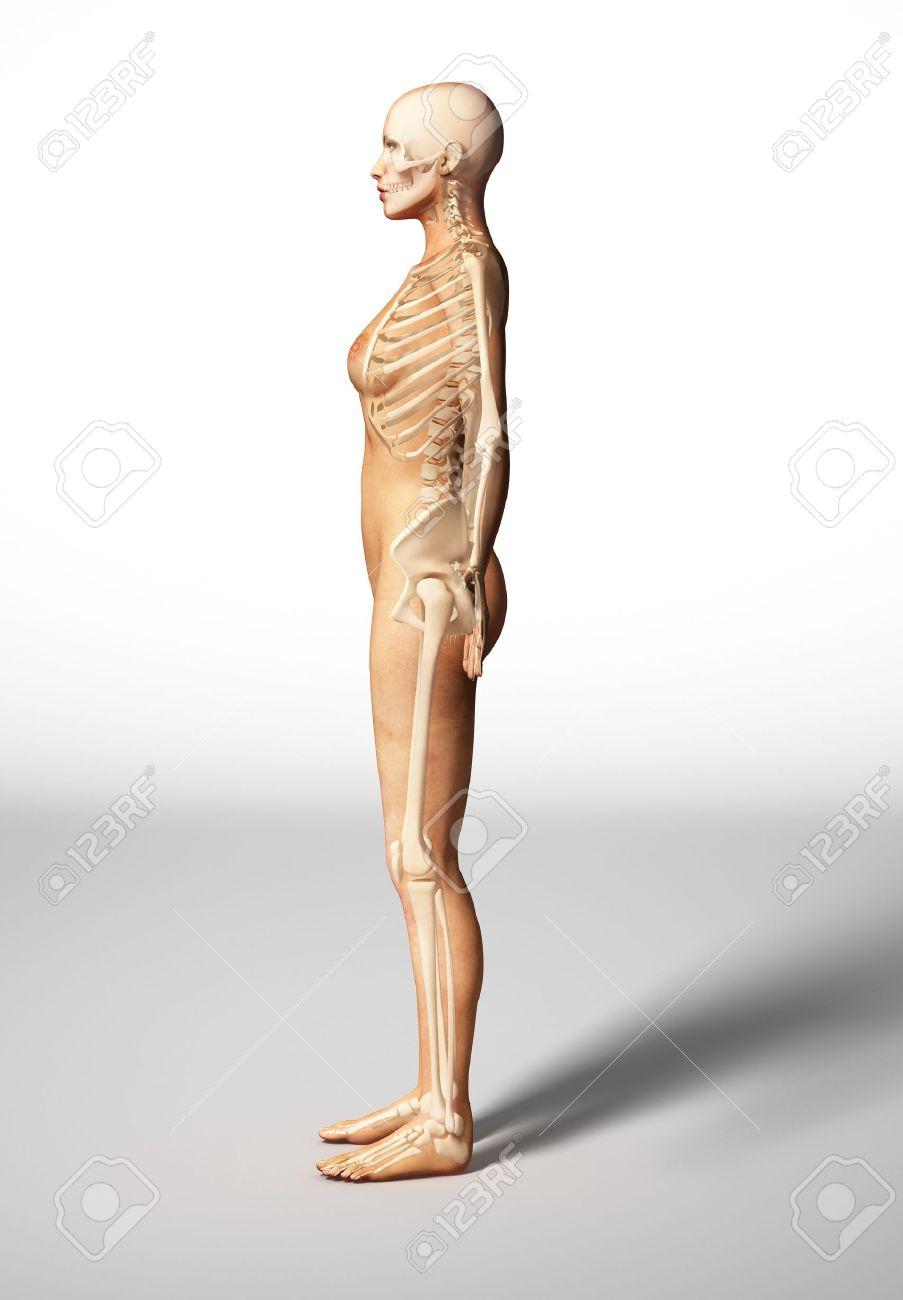 Nackte Frau Auf Etage, Mit Knochen, Skelett überlagert, Gesehen Von ...