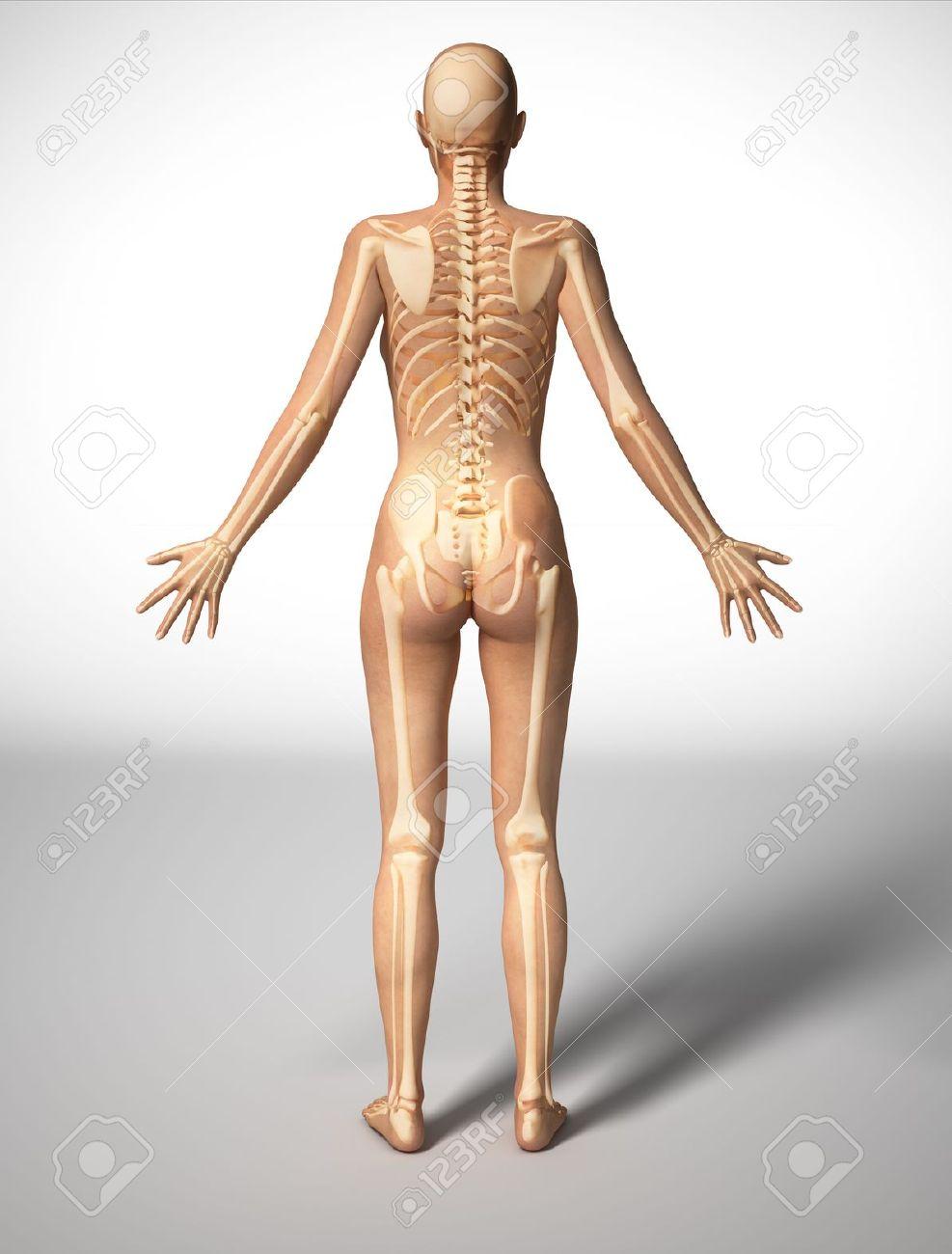 Mujer Desnuda De Pie En El Suelo, Visto Desde Atrás, Con Esqueleto ...