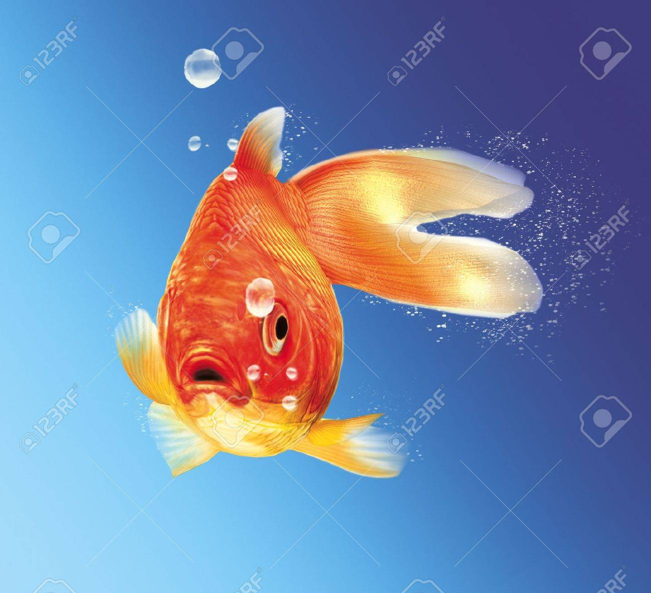 Gold fish facing the viewer, with some water bubbles, on blue gradient background. Stock Photo - 11779691