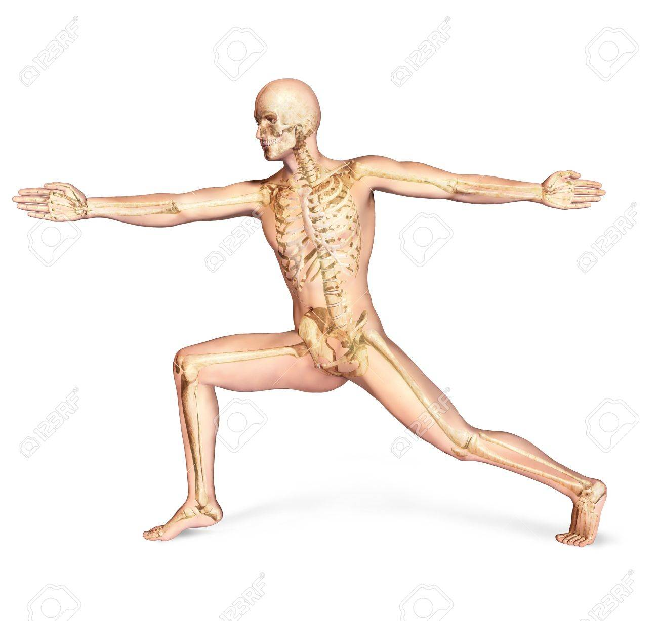 Human male in athletic dynamic posture, with full skeleton superimposed  On white background, with clipping path included Stock Photo - 19893730