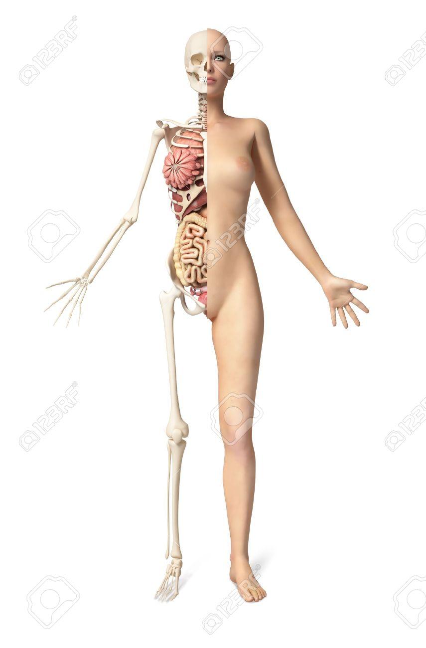 Nackte Frau Körper Stehend, Mit Halb Aufgeschnittene Skelett Zeigt ...