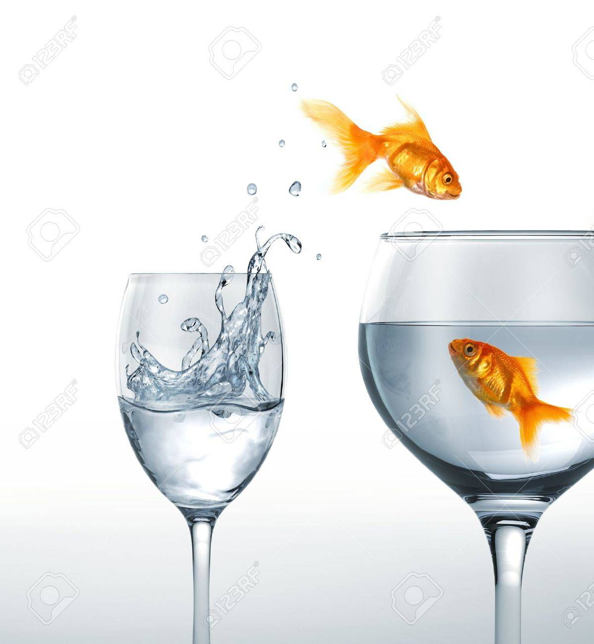 Gold fish smiling jumping from a glass of water, to a larger one, where another fish is waiting. On white background. Stock Photo - 19893752