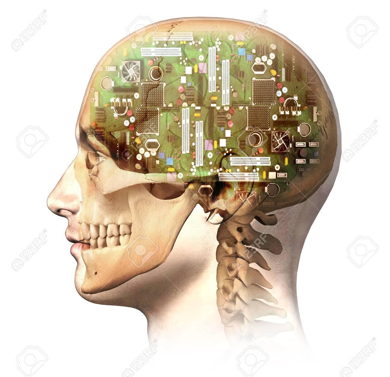 Hombre Cabeza Humana Con El Cráneo Y El Cerebro Circuito Electrónico ...