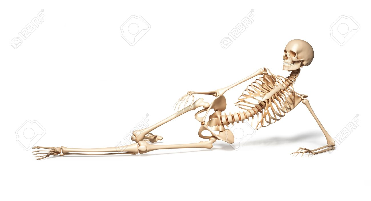 skeleton of human female lying on floor on white background, Skeleton