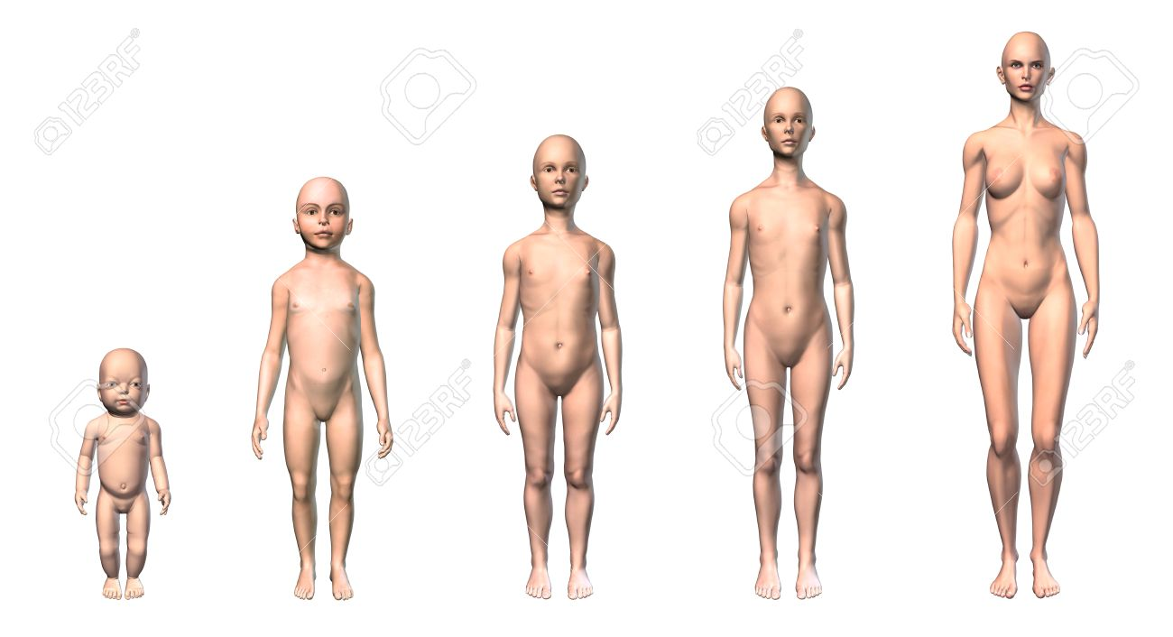 Female human body scheme of different ages stages, showing five