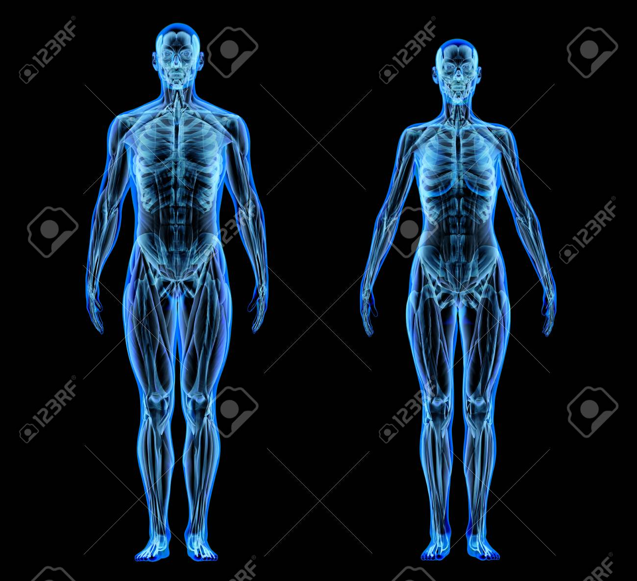 Man and woman muscle and skeletal systems. X-ray effect on black background. - 120522797