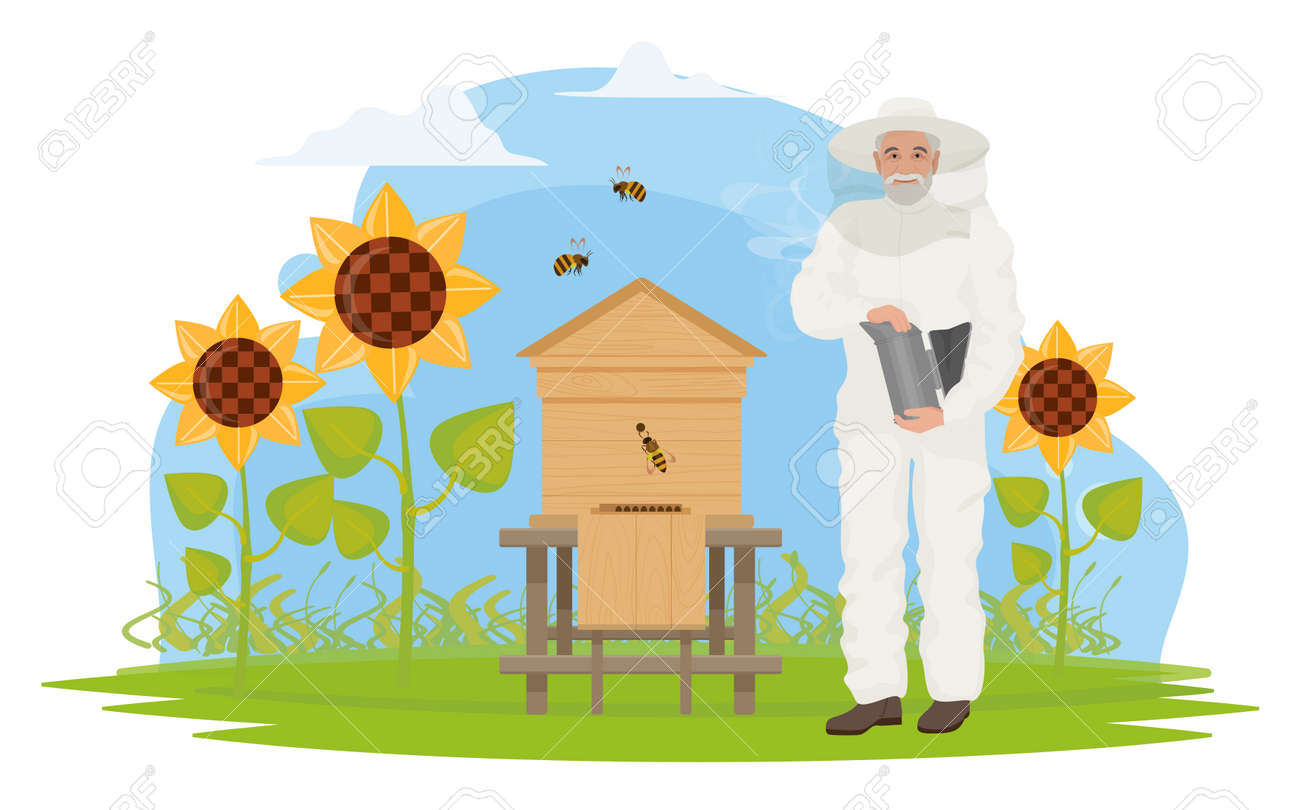 Beekeeper people people work on apiary, honey production vector illustration. Cartoon elderly apiarist character beekeeping, holding honeycomb, standing near hive, sunflower garden isolated on white - 170373991