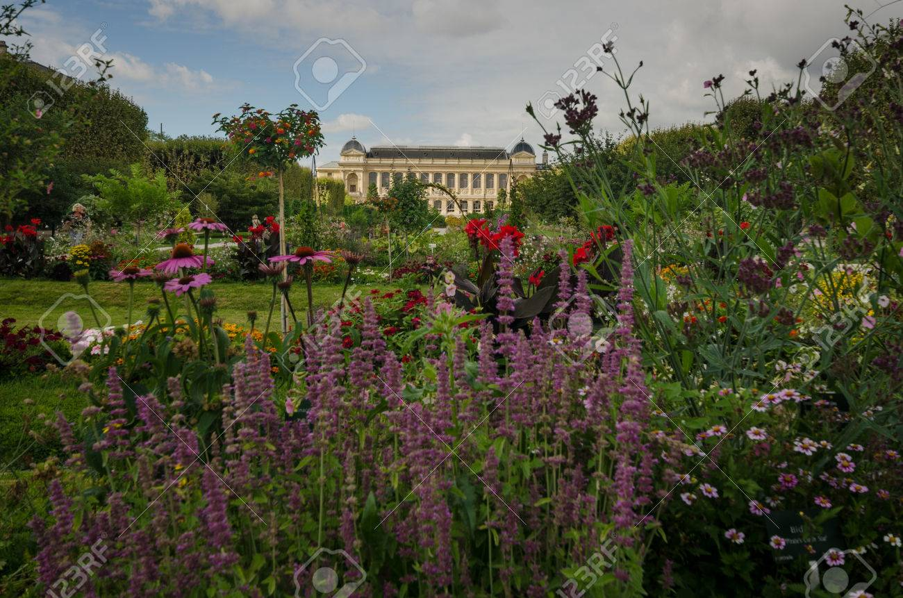 Paris, France, September 4, 2015 Flowers Bloom In Jardin Des.. Stock ...