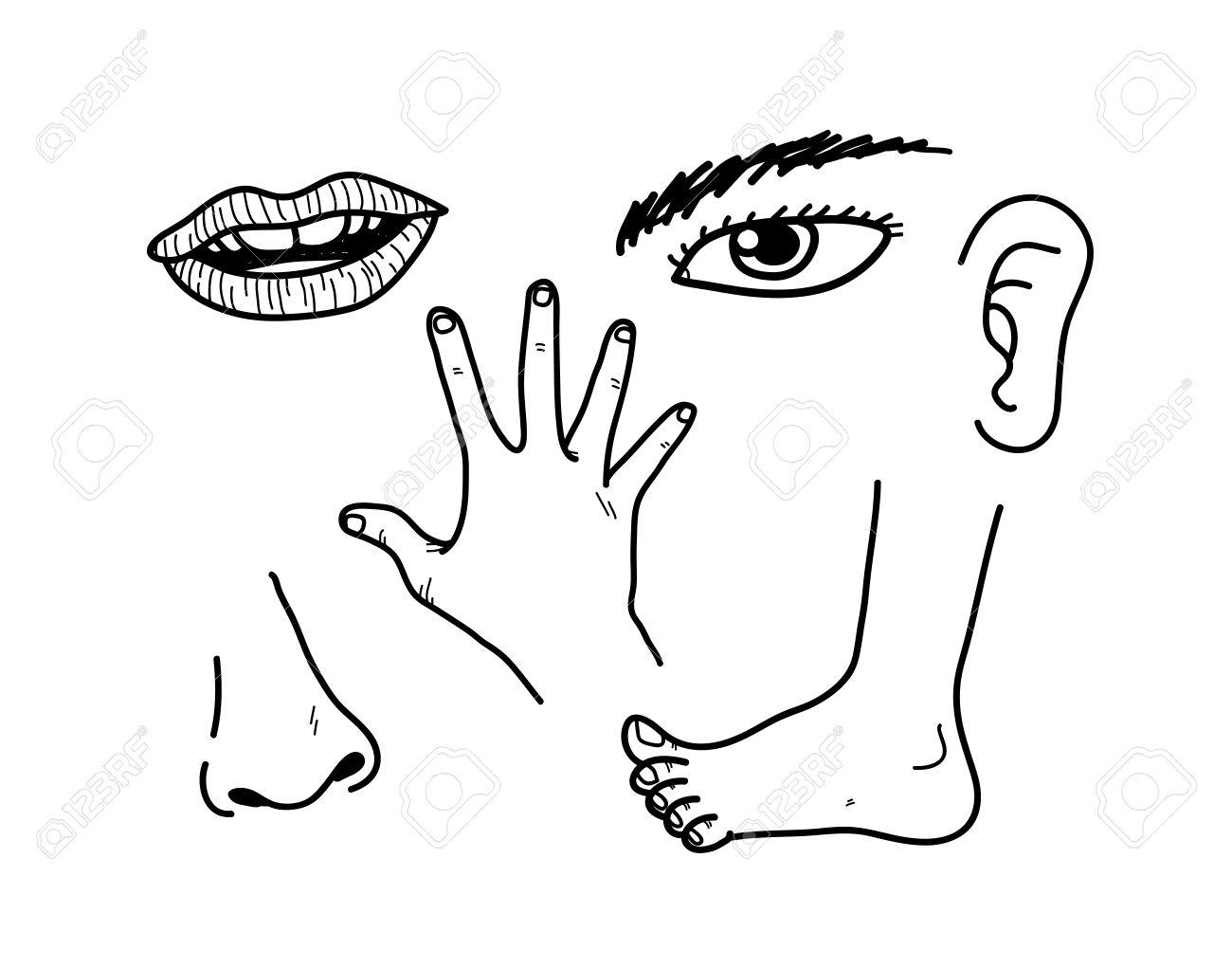 Partes Del Cuerpo Humano, Ilustración Del Doodle De Partes Del ...