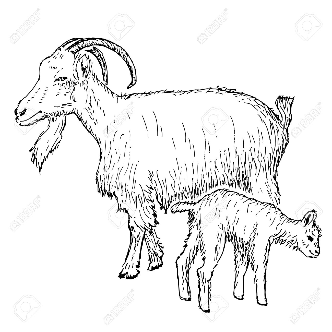 Goat With Kid Hand Drawing Set Of Vector Sketches Royalty Free ... for Kid Goat Clipart  181pct