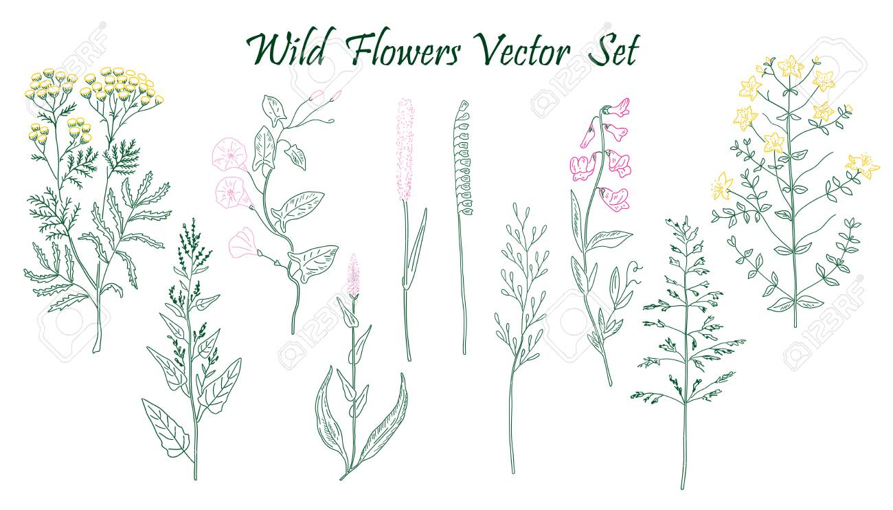Hand drawn Wild Flowers set of vector sketches. Vintage flowers. Stock  Vector - 56921281