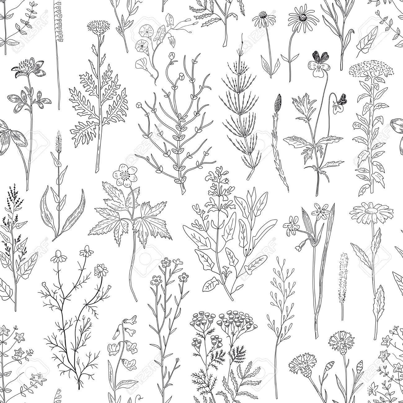 Hand drawn sketch herbs and flowers vintage seamless pattern. Vector illustration background. - 68881817