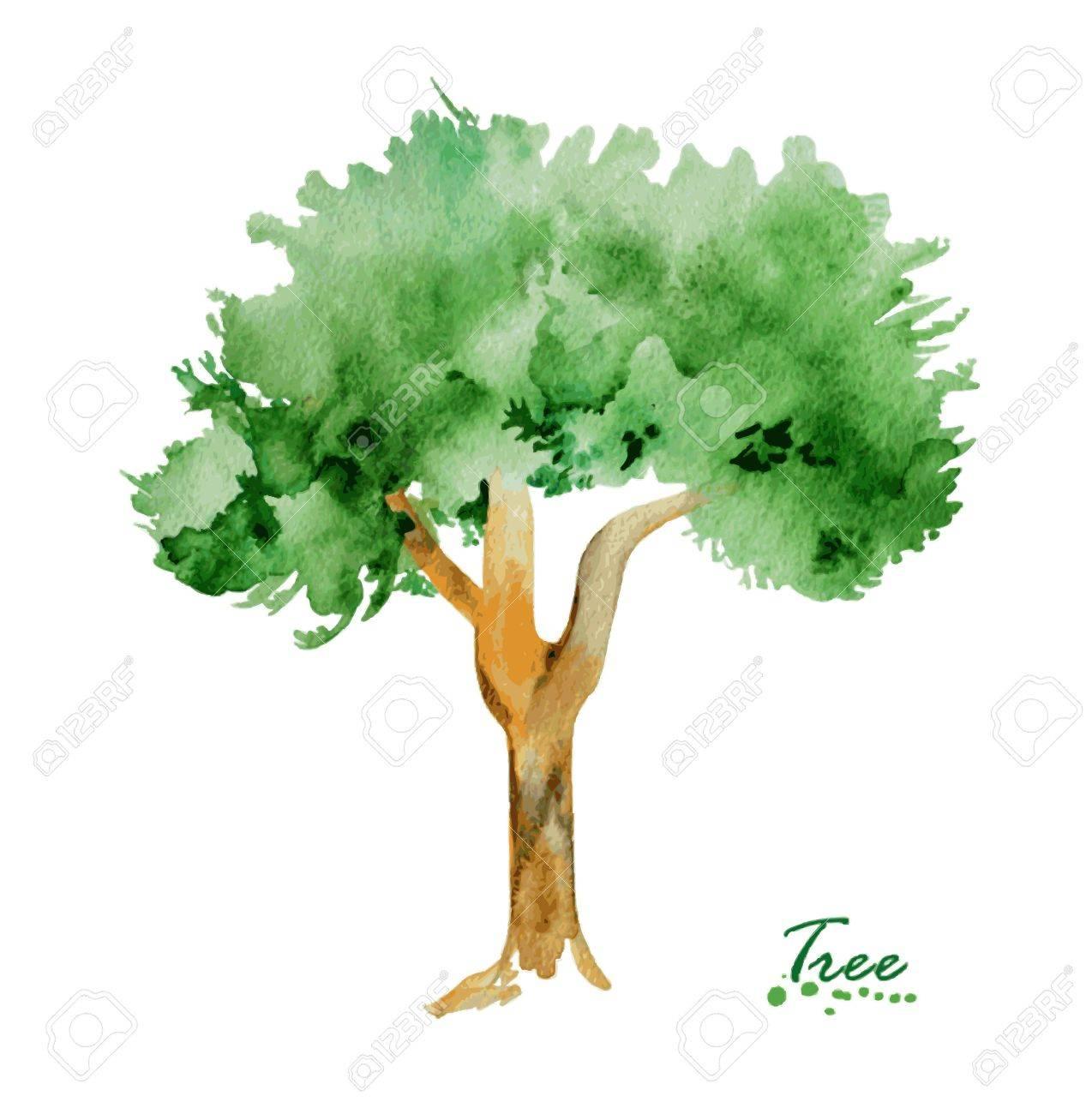 Aquarell Baum Mit Grunen Blattern Hand Gemalt Realistische