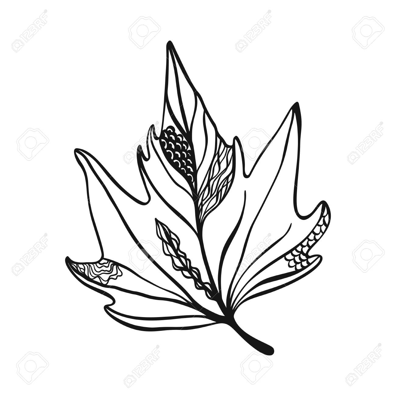 Hand Drawn Maple Leaf On White With Decoration