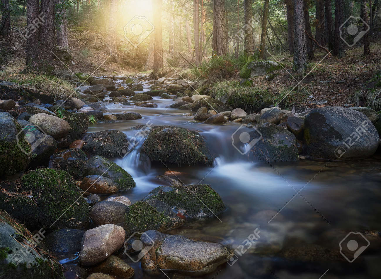 beautiful sunset, with the sunlight entering the pine forest, stream and waterfalls of Valsain in Segovia - 158757698