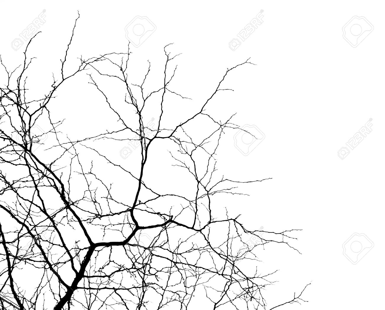 Tree Branches Isolated On The White Background Stock Photo, Picture ...