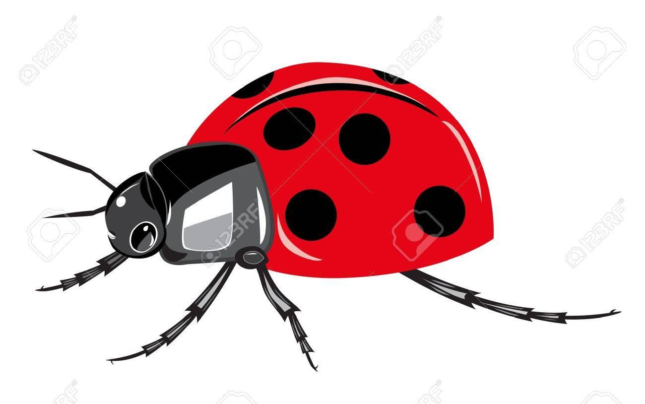 Ladybird isolated on white background Stock Vector - 14534442
