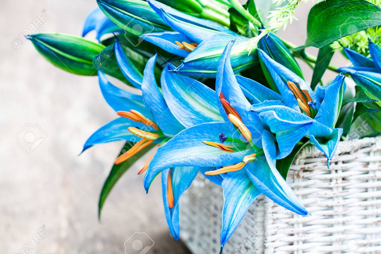 Teal lily flowers choice image flower wallpaper hd white basket with blue lily flowers bouquet on rustic wooden stock stock photo white basket with izmirmasajfo