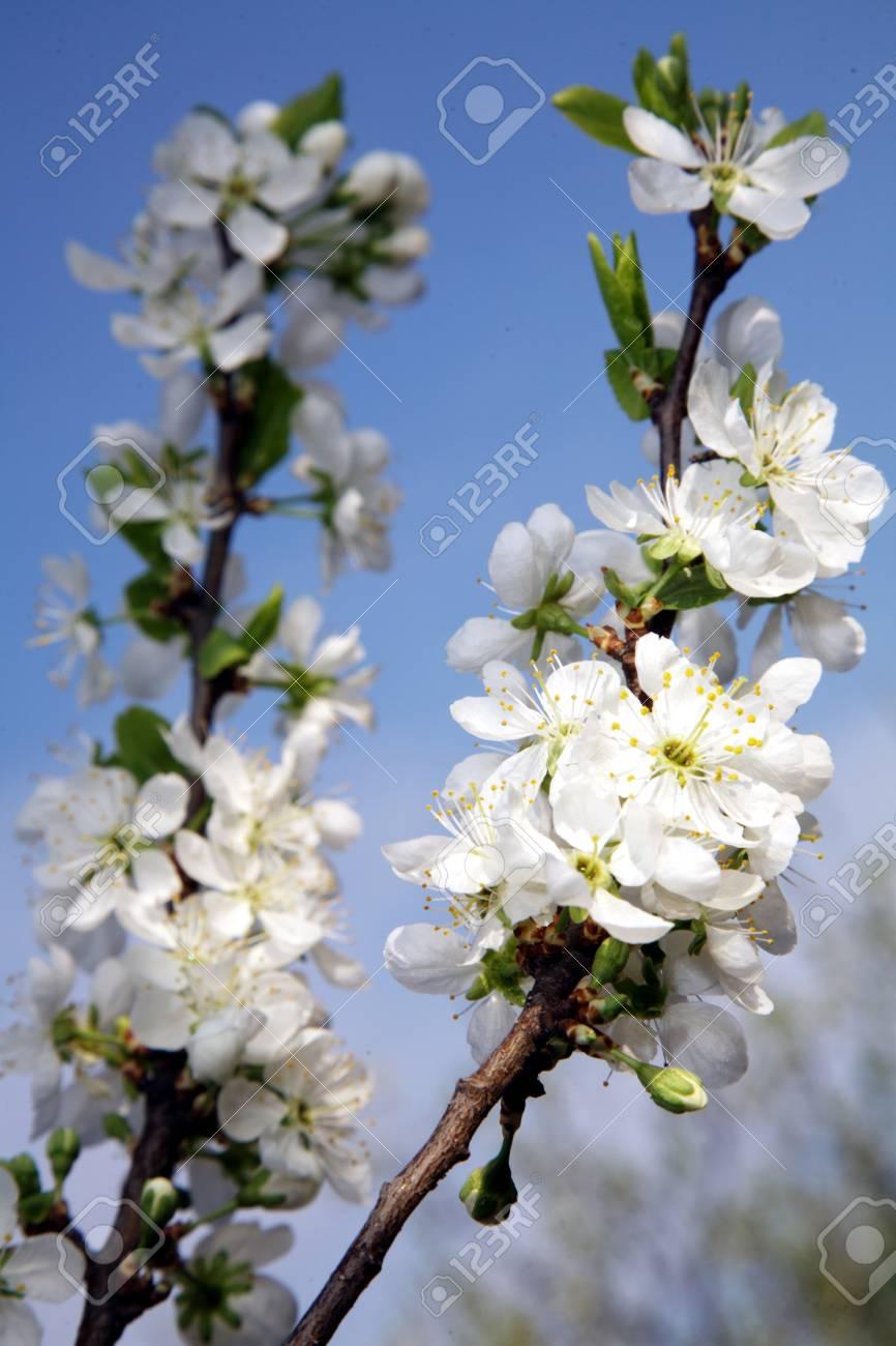 Fleurs De Printemps Tendres Macro Dans Le Jardin De Mai Banque D ...