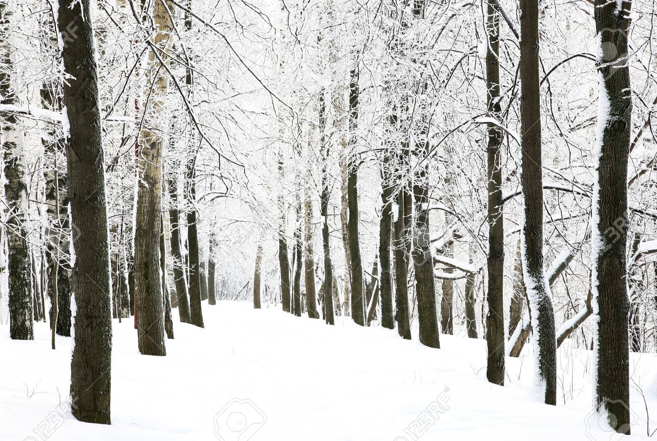 Snow walkway in winter forest Stock Photo - 17878720