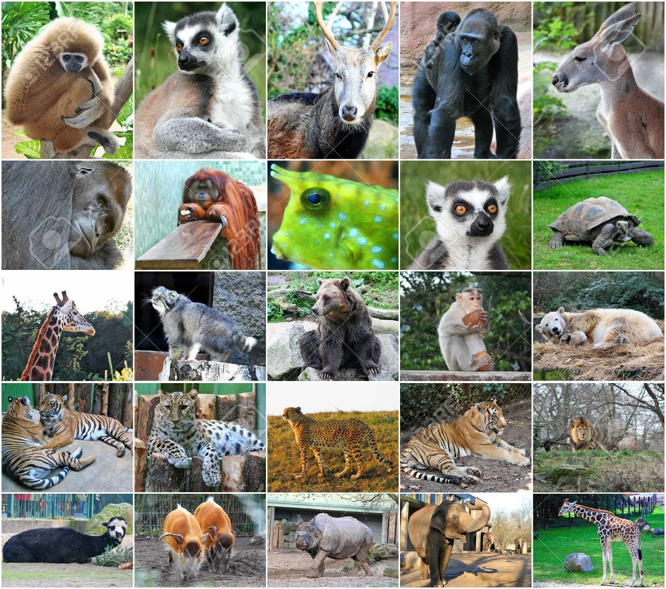 Collage Photos Of Some Wild Animals Stock Photo