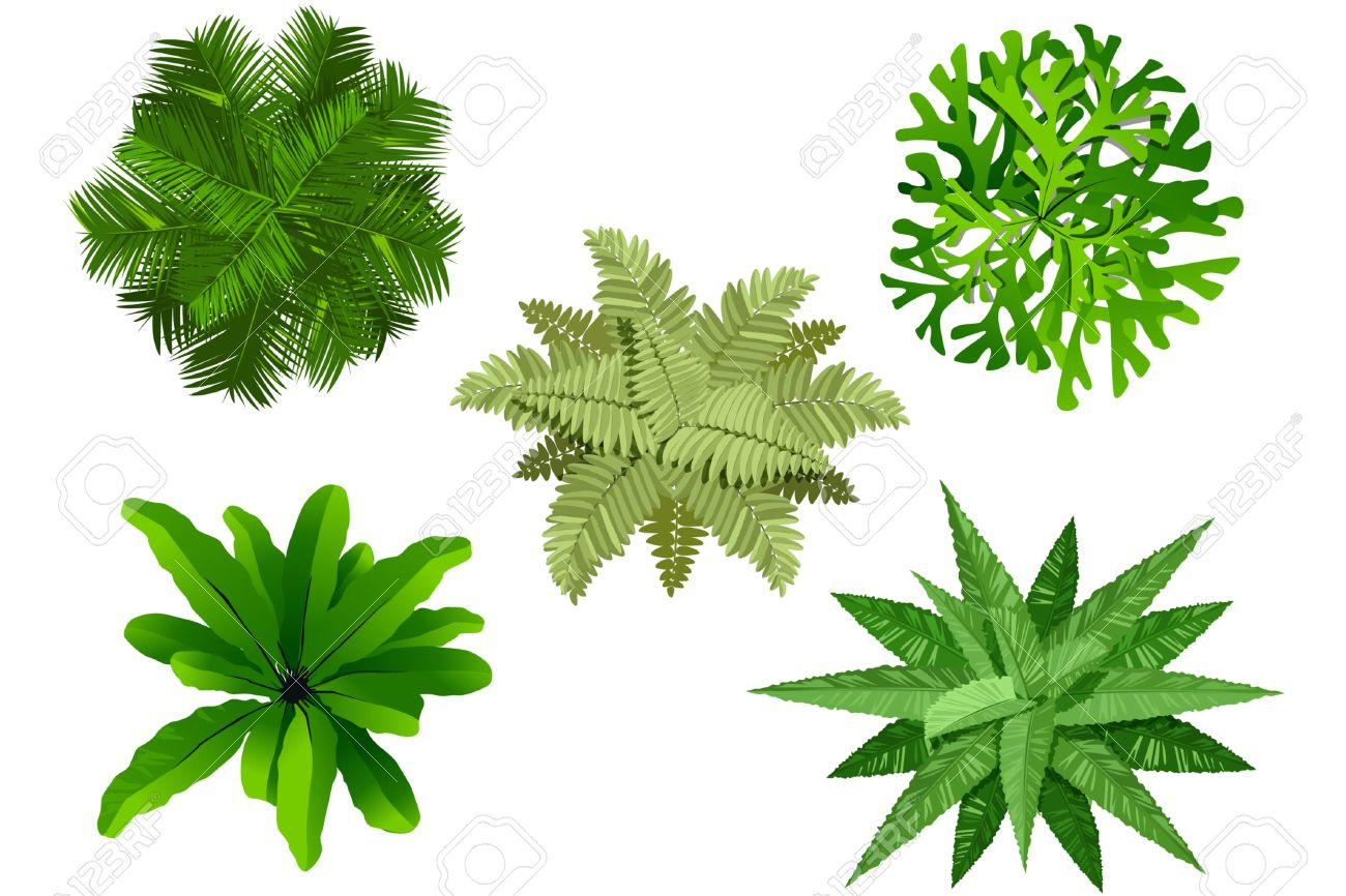 Plant top view vector in group download free vector art stock - Top View Plan Garden Tree Top View