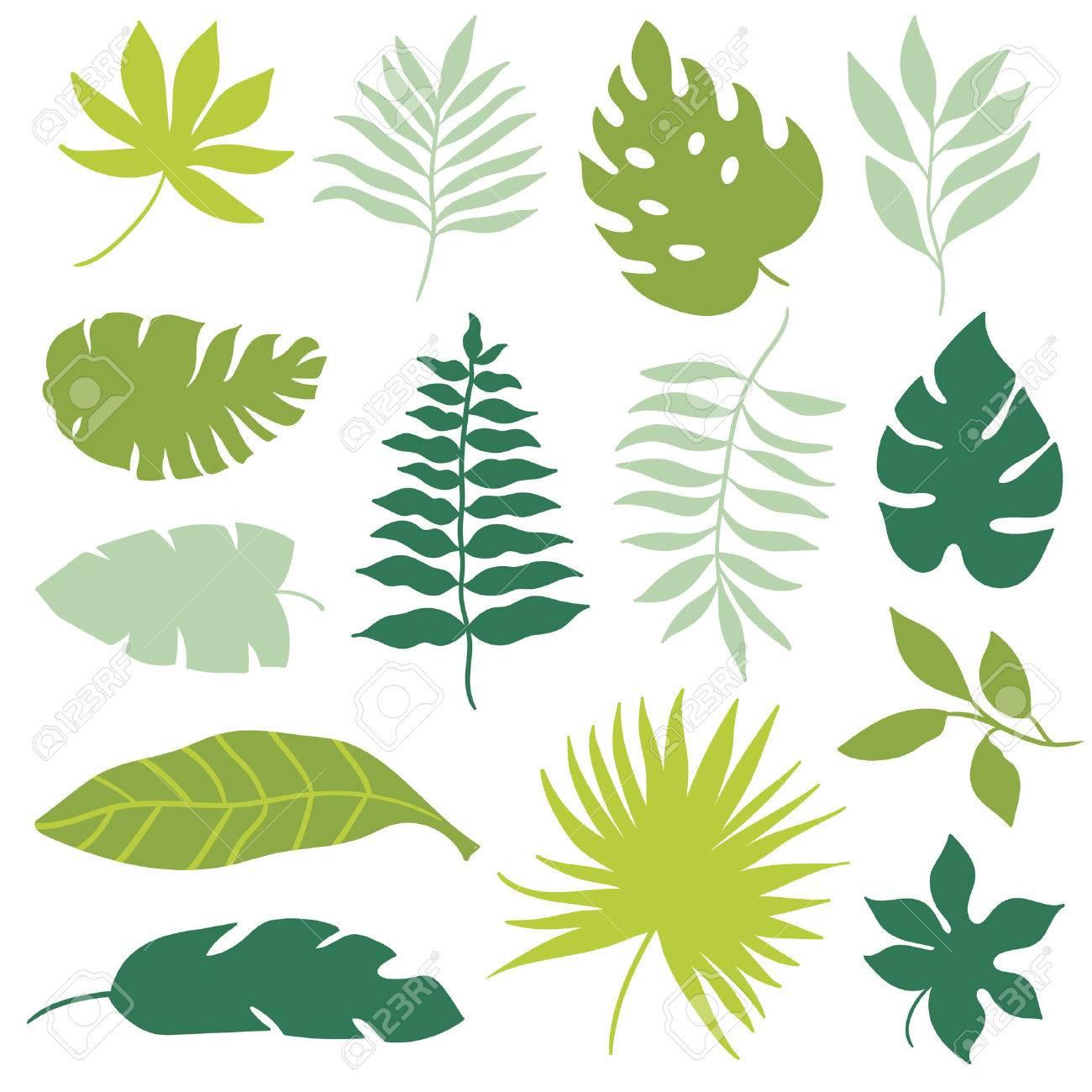 tropical leaves set - 54418168