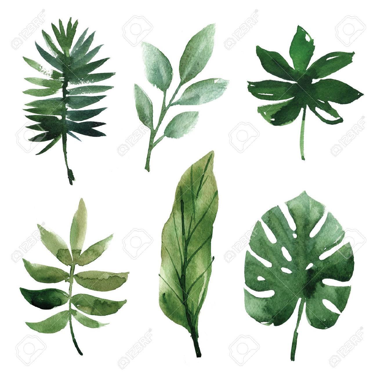 Watercolor tropical leaves - 56756357