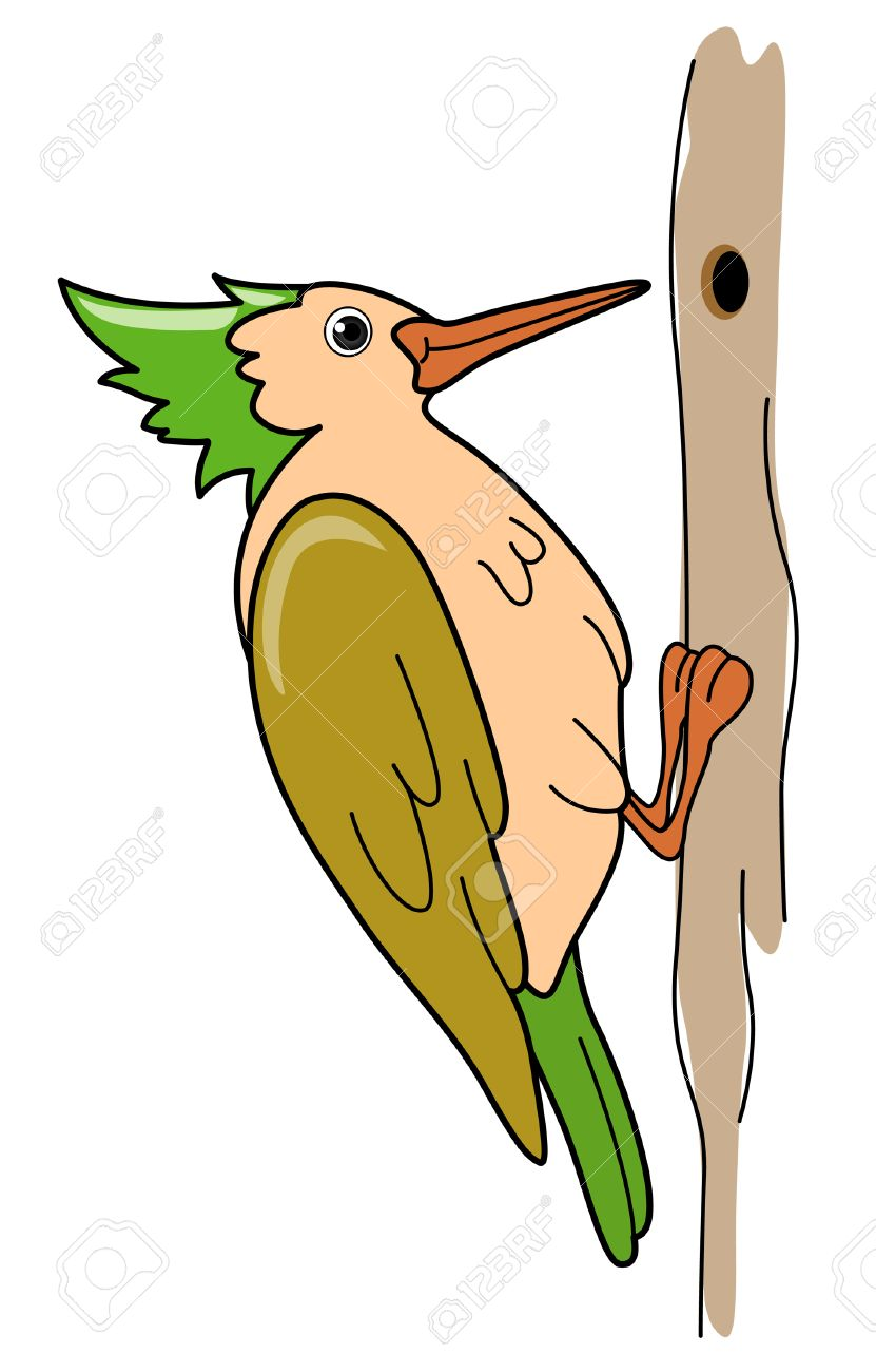 woodpecker illustration royalty free cliparts vectors and stock rh 123rf com downy woodpecker clipart woody woodpecker clipart