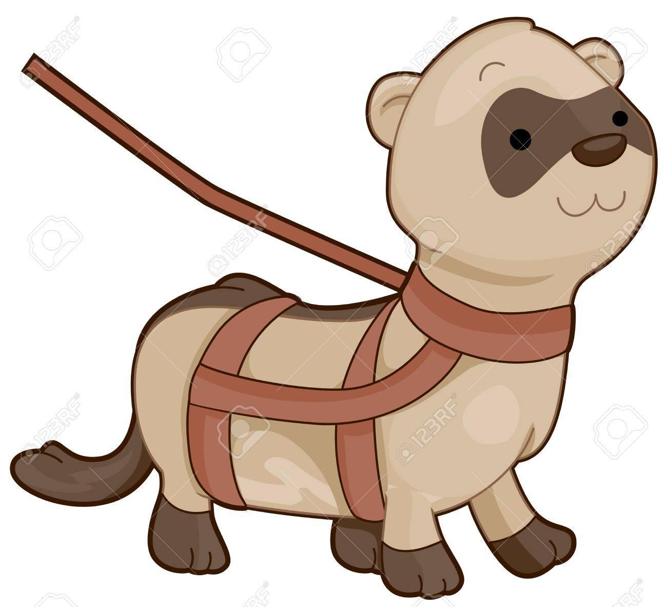 a cute walking ferret in a leash stock photo picture and royalty rh 123rf com cartoon ferret clipart cartoon ferret clipart